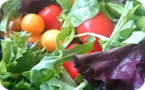 Frische Blattsalate mit Cocktail-Tomaten und Physalis, dazu ein Dressing von GIOVANNI'S Olivenöl und unserem Marillenessig - ca. 10 Portionen Vorspeisensalat - 35 €